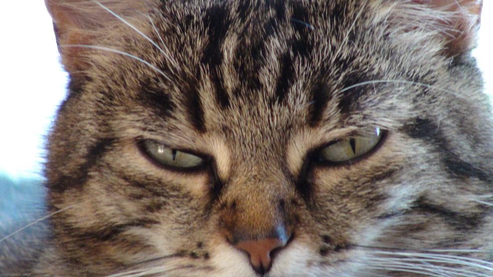 Katzenpsycholgie Ismaning